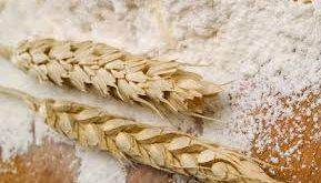 خرید اینترنتی آرد گندم دامی
