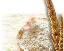 خرید بهترین آرد گندم دامی