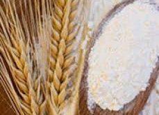 آرد گندم دامی