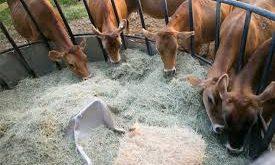 خرید انواع آرد گندم دامی