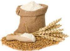 عرضه انواع آرد گندم دامی